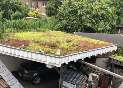 Dachbegrünung -5